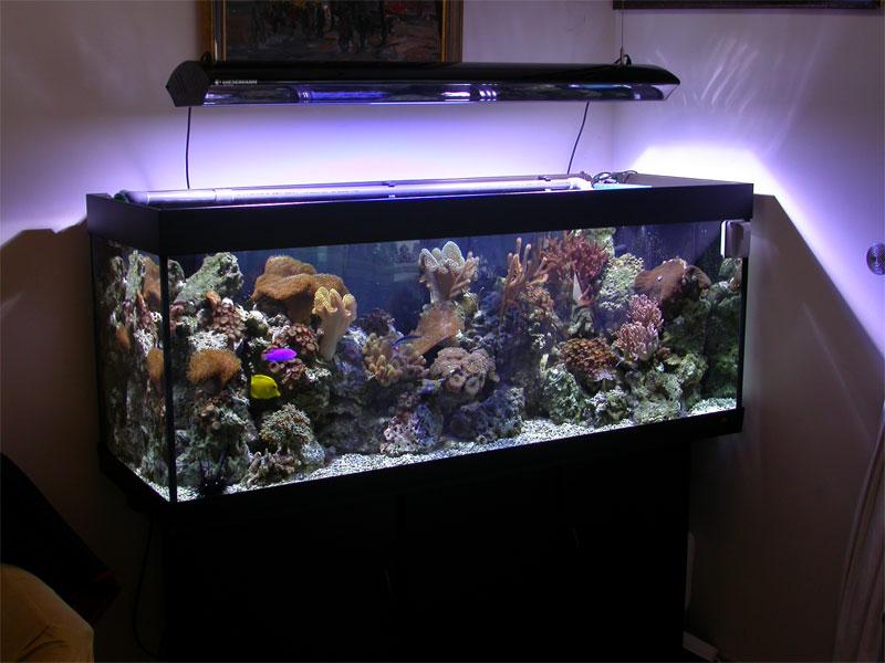 Как сделать освещение для аквариума своими 950